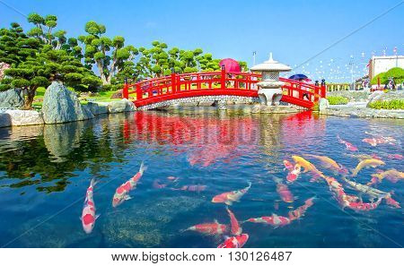 Koi fish pond inside Japanese culture with colorful fish swim in lake so far as rock garden with a bridge crossing an attractive place for tourists to relax, ecotourism in region Vietnam countryside