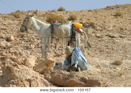 Bedouin Shepherd & His Donkey