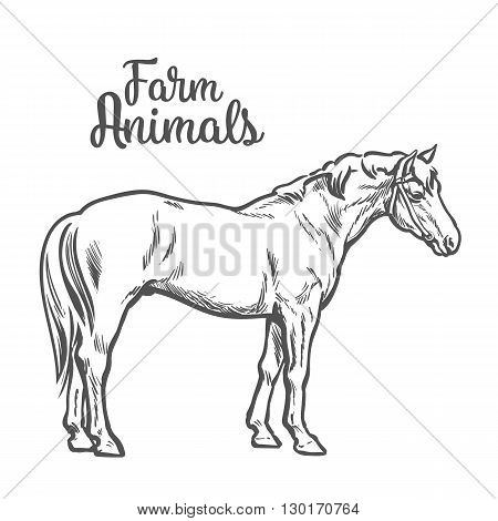 horse, illustration sketch of a hand-drawn with a single animal, the only white brown horse, pet and animal farm young stallion, a horse farm, isolated