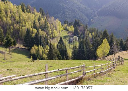 Spring landscape of an abandoned, isolated house in the fir trees forest