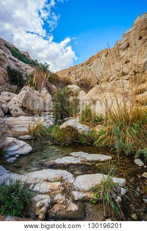 The stream of cold pure water flows through the beautiful gorge Ein Gedi, Israel.  Typical landscape of the Middle East