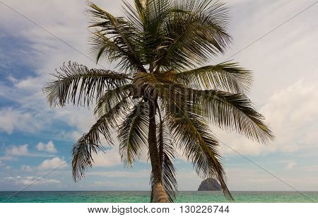 The palm trees on blue sky on Martinique island French West Indies.