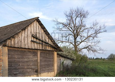 Abandoned barn in rural outback near the resurgent spring nature against a beautiful sky. «If time exists in nature, then it is not already open ...». (Konstantin Tsiolkovsky).