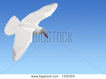 the seagull flying in the sky above the sea poster