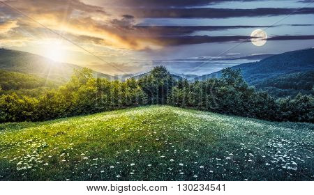 trees on hillside of mountain range with coniferous forest and flowers on meadow. composite image day and night with full moon