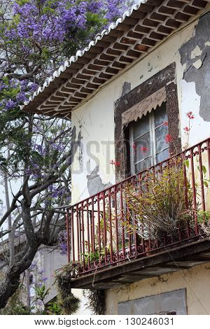 Jacaranda tree and weathered facade in Funchal on the island of Madeira