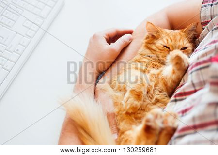 Happy cute ginger cat lying on the desk next to the keyboard. Man holds sleeping pet. Cozy morning at home.