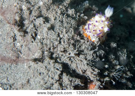 Colorful Nudibranch Portrait