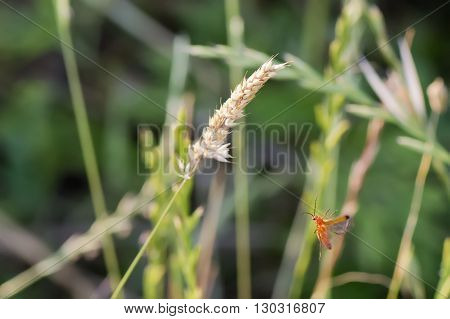 A Cricket While Flying To A Spike