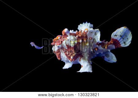 Brown And White Frog Fish
