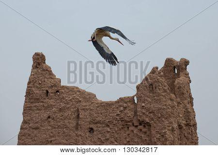 A Stork On Ait Ben Haddou