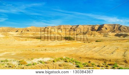 The poor vegetation of Negev desert the hot and dry region of Israel.