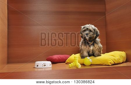 photo on dog puppy studio with bed and toys