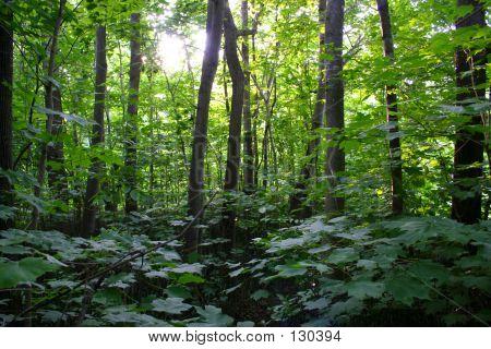 Elm Creek Forest 4