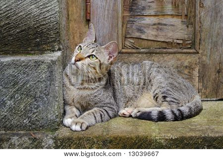 Cat sitting on a doorstep