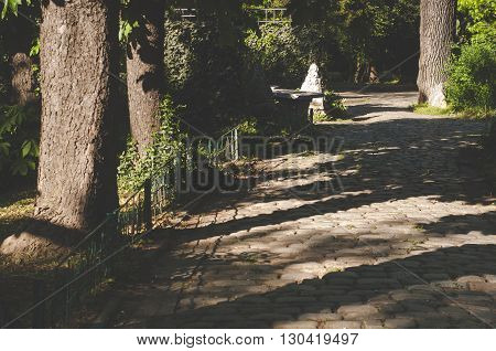 Paved stone walkway and trees in the park. Harsh shadows