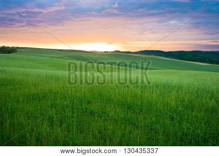 Colorful sunset over the fresh green wheat fields on the rolling hills of the Val d'Orcia valley in Tuscany Italy.