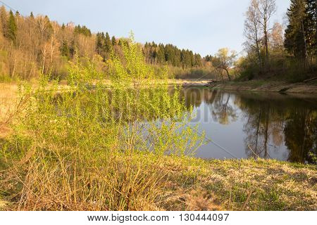 The river bank in the spring lit with the sunset sun. Mai midland of Russia river Moscow. The coast is covered with a dry grass after a flood on trees gentle first greens