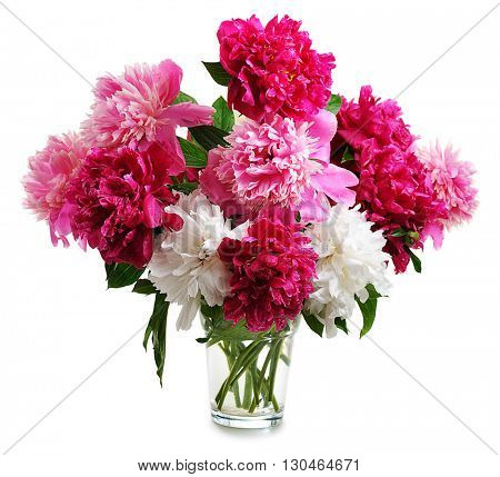 colorful peonies isolated on white background