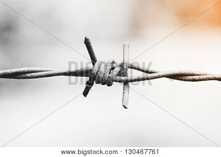 Barbed wire fence for demarcation. Shot from close range.