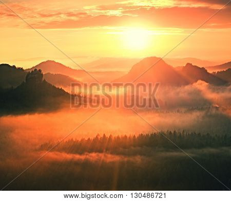 Marvelous Red Awakening. Autumn Beautiful Valley. Peaks Of Hills Are Sticking Out From Fog Red And O
