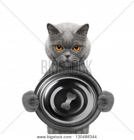cat wants to eat and hold a bowl -- isolated on white