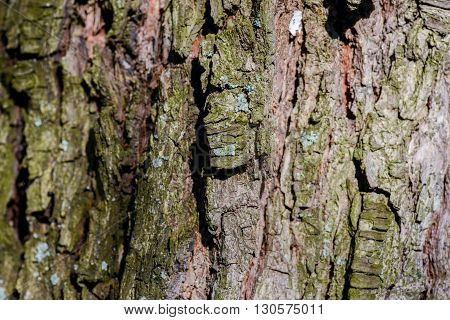 Tree bark in natural and harsh light