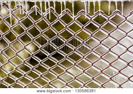 Icy fence with green background in ice storm