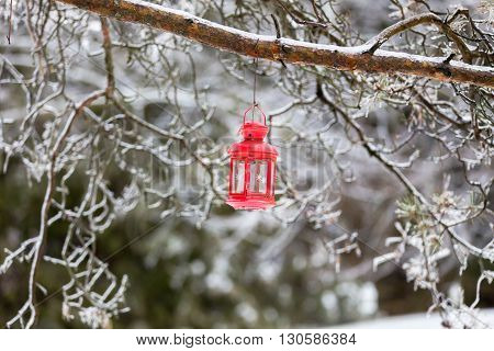 Red lantern on an icy tree branch