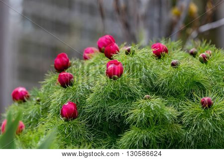 bunch of red flower on green plant