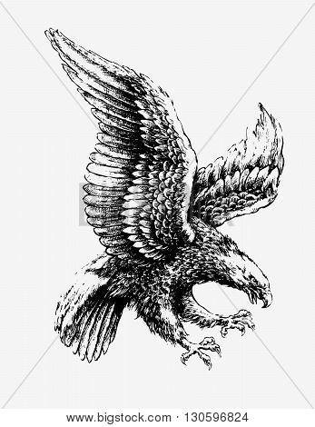 Swooping Eagle detailed pen and ink vector illustration