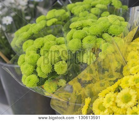 Fresh green flowers bunches of green and yellow Chrysanthemums at Flower Market