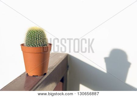 the cactus on the bar and the shadow with the sunlight