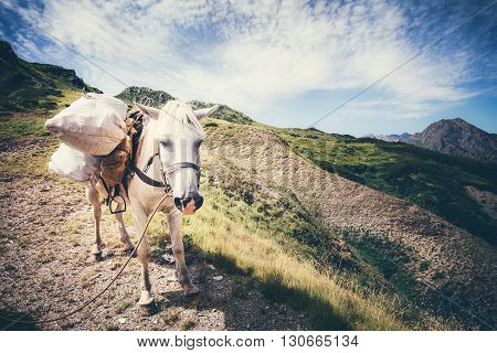 White Horse pack Animal with mountains and clouds landscape on background