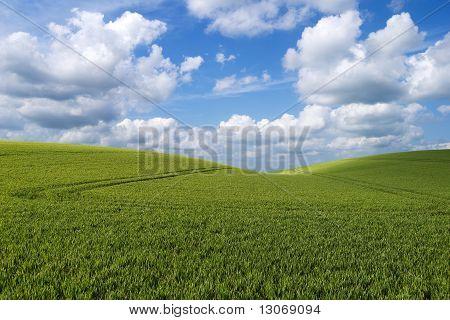 Rolling Hill Landscape