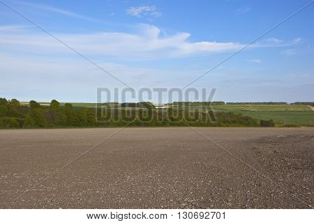 Cultivated Field With Woods In The Yorkshire Wolds