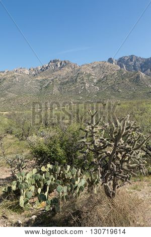 Cholla and prickly pear cacti in Arizona's Catalina State Park