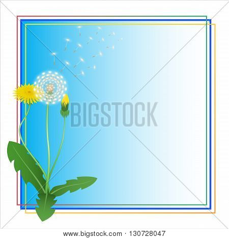 Dandelion Taraxacum Blowball Flower Blue Frame. Blue Vector Background. Place for Text.  Can Used for  Greeting Card, Postkard, Thank You Card,  Invitation, Decorative Backdrop, Floral Illustration.