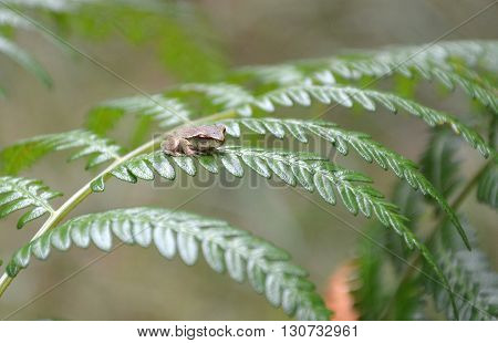 Small cute frog sitting on a fern frond