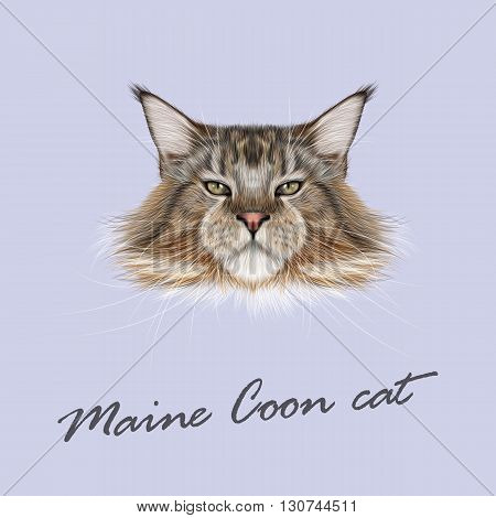 Vector Illustrated Portrait of Maine Coon cat. Cute fluffy face of domestic cat on blue background.