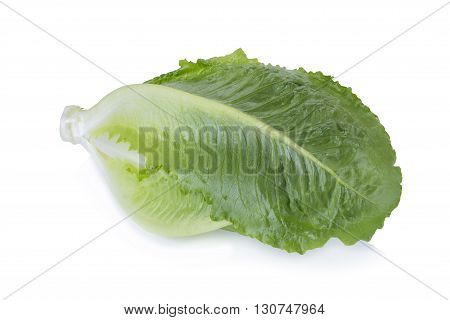 green Cos Lettuce Isolated on White Background.