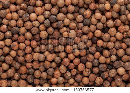 Organic Indian sandalwood (Santalum album) seeds. Macro close up background texture. Top view.