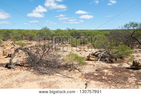 Native landscape with sand, sandstone and green flora in the bushland at Kalbarri National Park under a blue sky with clouds in Western Australia.