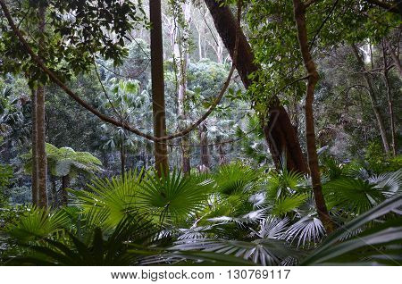 Light filtering through into the rainforest understory of ferns, palms and vines