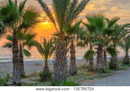 Palms on tropical beach and sunset over sea