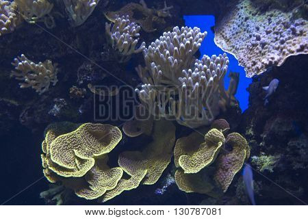 amazing tropical coral reef close up view