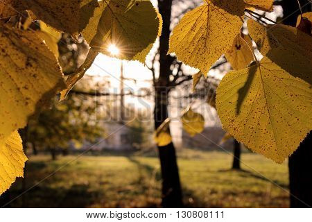 Sun in the leaves - close up