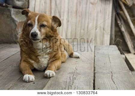 Old dog waiting for his master to work.