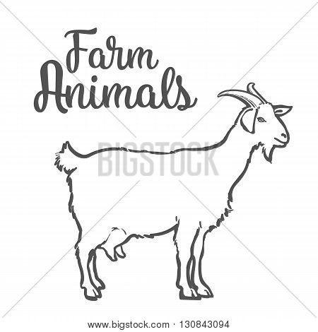 Farm pet goat sketch drawn by hand, cattle, milk and goat meat, goat meat, one farm horned animal on a white background, illustration livestock - goats.