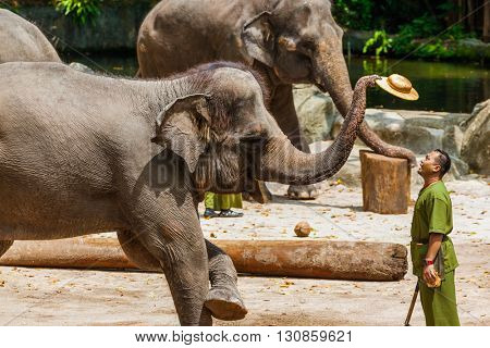 SINGAPORE - APRIL 14: Elephant show in Singapore zoo on April 14, 2016 in Singapore.